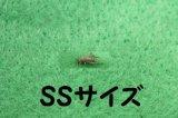 こだわりのヨーロッパイエコオロギ SSサイズ 10匹単位【猛暑につき受け取り時間指定】
